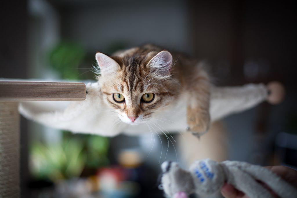 tussochtass-kattfotograf